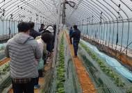 인천강화군 농업기술센터, 도시근교농업 수경재배 현장교육 실시