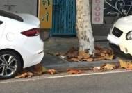 어린이보호구역 내 '개구리 주차'… 어린이 안전·보행권 위협
