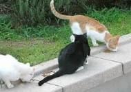 [이웃갈등으로 번진 길고양이] 끼니 챙겨주는 캣맘 vs 주민 '불편한 동거'