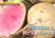 '수박무' 효능 관심, 일반 무 8배 이상 소화효소·영양분 가지고 있어…다이어트에도 탁월