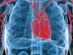 '콜레스테롤 제거 유전자' 심장질환 예방한다