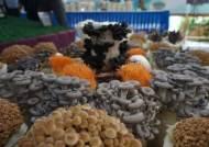 농진청, 농업과학관에서 전국 팔도 버섯 특별 전시회 개최