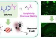 치매 치료 가능성 열리나…손상된 뇌 신경교세포 회복시키는 '저분자 화합물' 발견