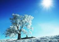 햇빛이 대사증후군 막을 수 있을까?
