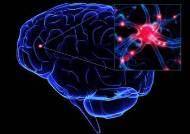 유전자 조작된 소아마비 바이러스로 뇌종양 치료한다