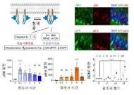 머리에 빛 비춰 신경세포 재생과 공간기억 향상
