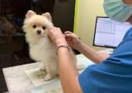동작구, 반려동물 광견병 예방접종 백신 지원