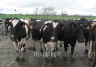 강한 협동조합, `농업강국` 뉴질랜드의 힘
