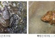 백운동천·백사실계곡 등 서울시내 계류 4곳 '1급수'