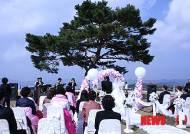 정선 엽기소나무 아래서 '엽기 결혼식'