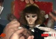 이란 당국, 원숭이 태운 로켓 발사 및 회수 성공