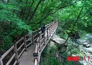 보경사~경북도수목원, 내연산 계곡 숲길 개통