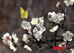 '봄 마중' 나온 나비 날갯짓