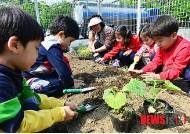 성동구, 어린이 도시농업체험장 모종심기'