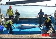 울산 정자항 해상에서 긴부리참돌고래 혼획