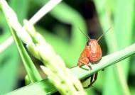 국립과천과학관, 식용곤충 체험프로그램 개최