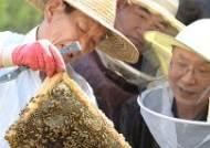 초보 도시양봉가들의 2015년 첫 꿀 채밀