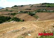 가뭄 속 배추 농사