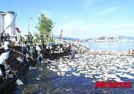 기름 유입 여수박람회장 해안가 이틀째 방제 작업