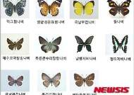 나비 서식지 북방한계선 매년 1.6㎞ 북상…지구온난화가 원인