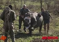 남아공 '크루거 국립공원' 코뿔소 밀렵 방지 활동