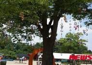 렛츠런파크 서울, '행운의 편자나무' 볼거리 풍성