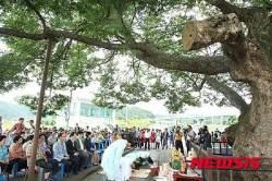 대전서구 '천연기념물 느티나무 목신제'