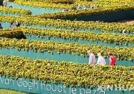 해바라기 꽃으로 장식된 네덜란드의 반 고흐 박물관