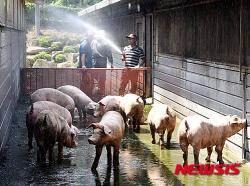 돼지 가격기준 '박피→탕박'으로 변경