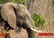 인도 고아·라자스탄주 '코끼리 처우' 정밀점검
