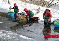 얼음물 속 토하 잡는 강진 주민들