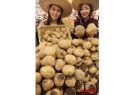제주 감자 대신 밀양 감자 출시