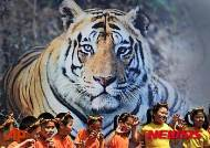 전 세계 야생 호랑이 수, 100여년 만에 첫 증가…2014년 말 현재 3890마리