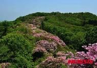 서리산 철쭉동산