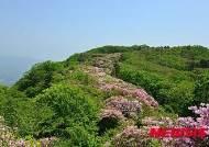 개화 시작한 서리산 철쭉동산