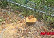 순천 주암댐 도수터널 공사장, 가로수 81그루 무단 벌채