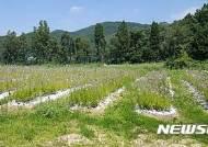 화성시, 우병우 수석 처가 소유농지 일부 '휴경' 확인