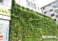 노원구, 건물외벽 '녹색커튼'으로 더위 잡는다