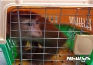 밀반입된 돼지꼬리원숭이