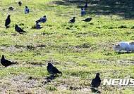 [종합2보]서울시, AI 차단위해 농가사육 닭·오리 910마리 전량 수매…야생고양이 등 폐사체 AI 검사