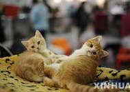 '고양이 질식사 실험' 실린 인도 교과서 논란