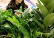 '공기정화 관엽식물 보세요'