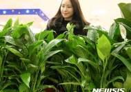 롯데마트 공기정화 관엽식물 대전