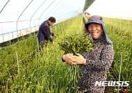 당진 화훼농가, 일본에 9만본 수출