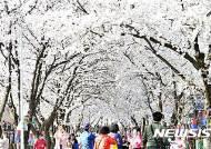 제천 청풍호벚꽃축제 본행사 7일 개막