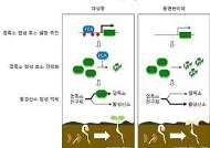 서울대 연구진, 식물 지구온난화 대응 원리 세계최초 규명