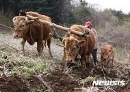 소 쟁기질하는 농부