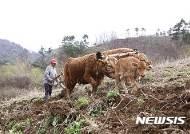 긴 밭을 언제 갈려나…쟁기질하는 농부