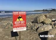 미 캘리포니아 해수욕장서 상어가 여성 공격..허벅지 물어가