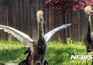 세계 생물종 다양성 보존의 날, 날개 펴는 관학